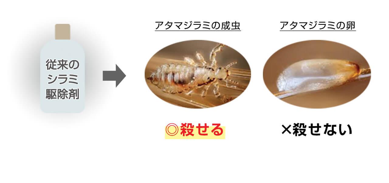 成虫 シラミ